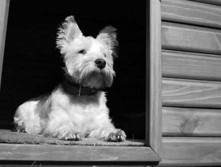 chenil chien